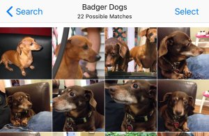 badgerdogs