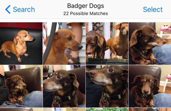 badgerdogs
